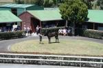 Yearling Parade - Sunday 9th February 2013